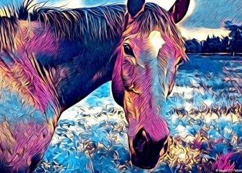 horse coloring sheets