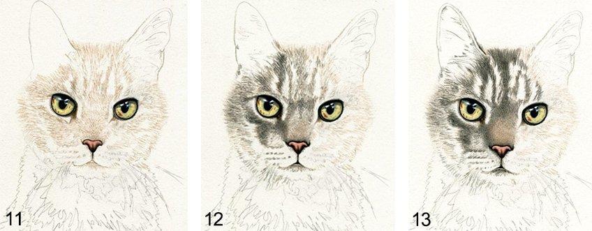 animal drawing guide