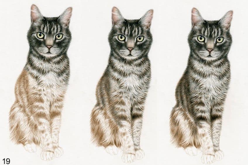 animal drawings easy