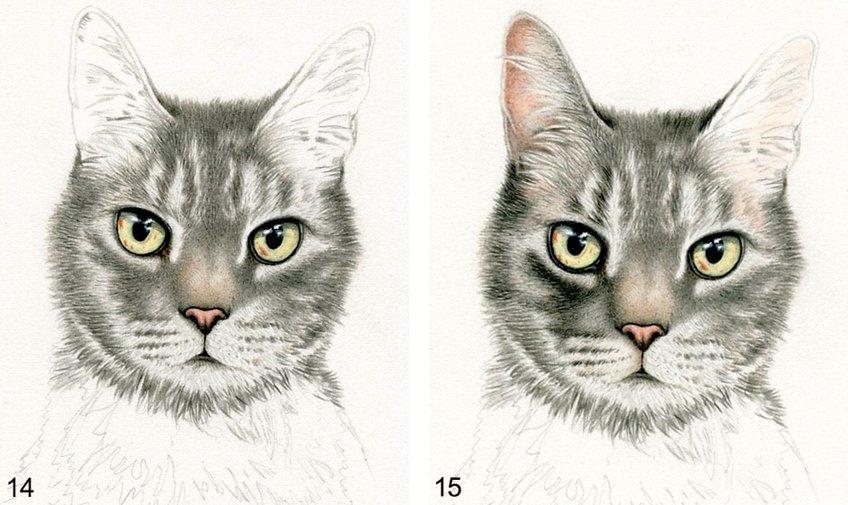 animal drawings guide