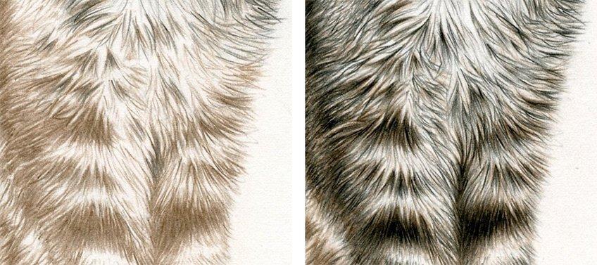 drawing an animal