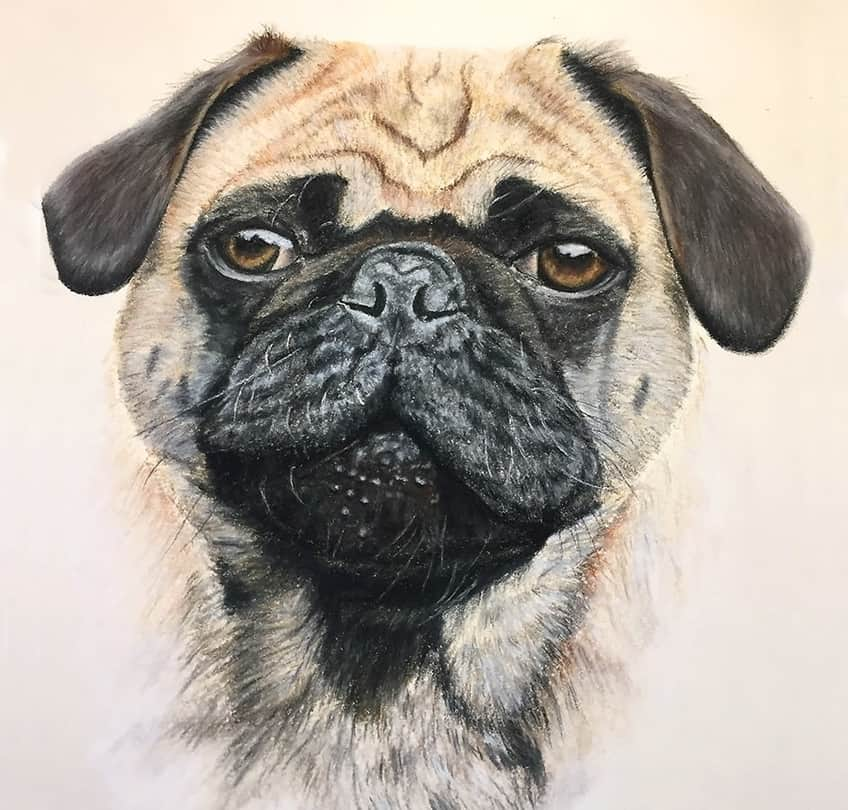 simple dog drawing