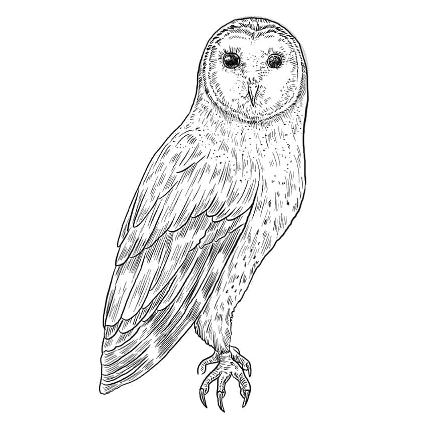 owl drawing step10