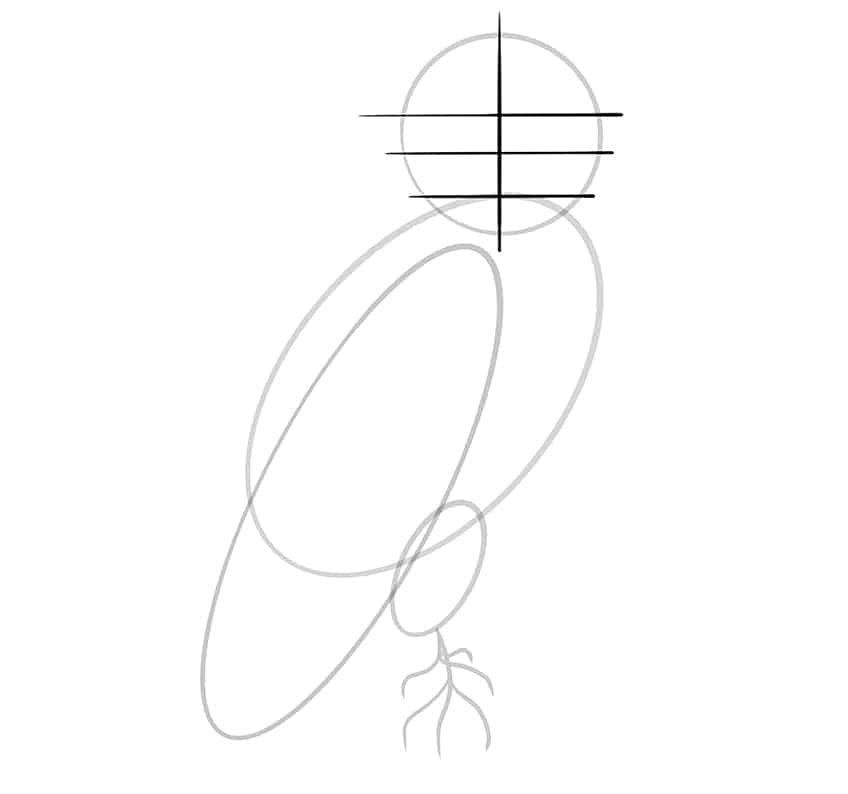owl drawing step6