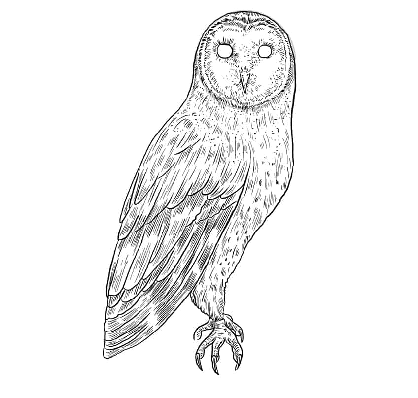 owl drawing step9