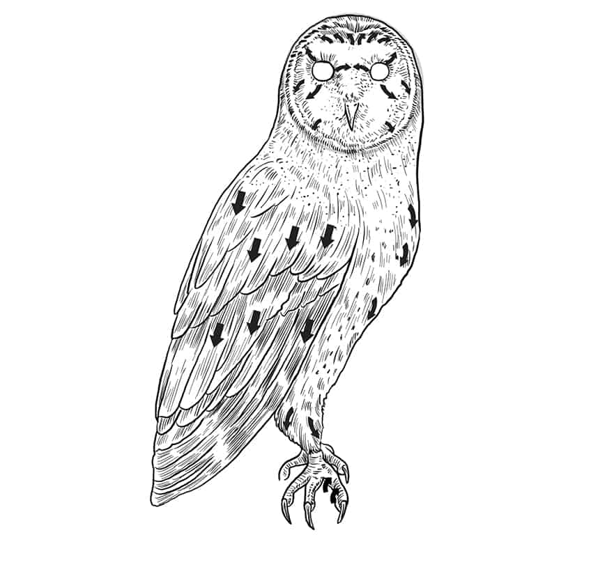 owl drawing step9a