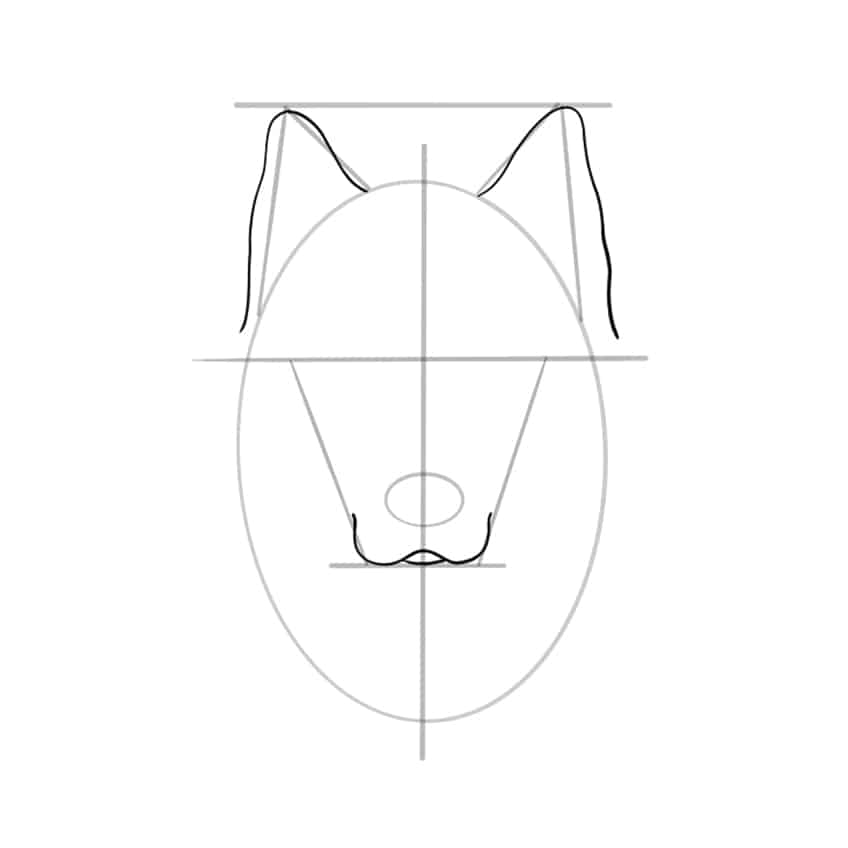 wolf drawing step 06