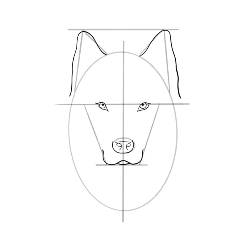 wolf drawing step 07