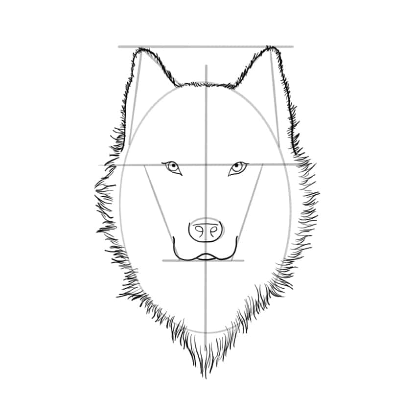 wolf drawing step 08A