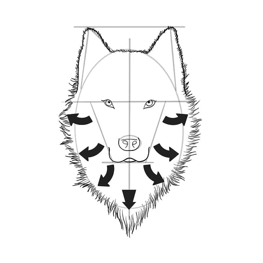 wolf drawing step 08B
