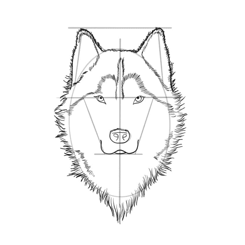 wolf drawing step 09