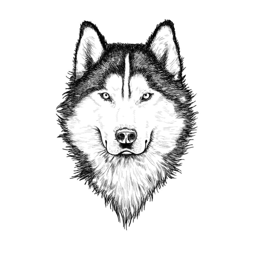 wolf drawing step 10