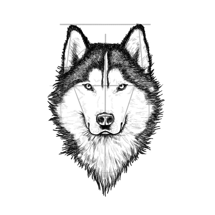 wolf drawing step 10A