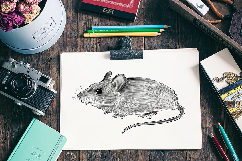 how to draw a mouse 2