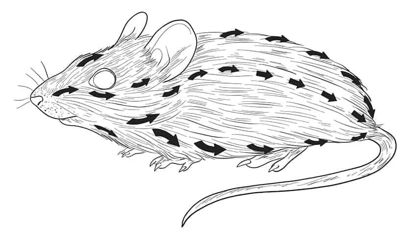 mouse drawing step10-2