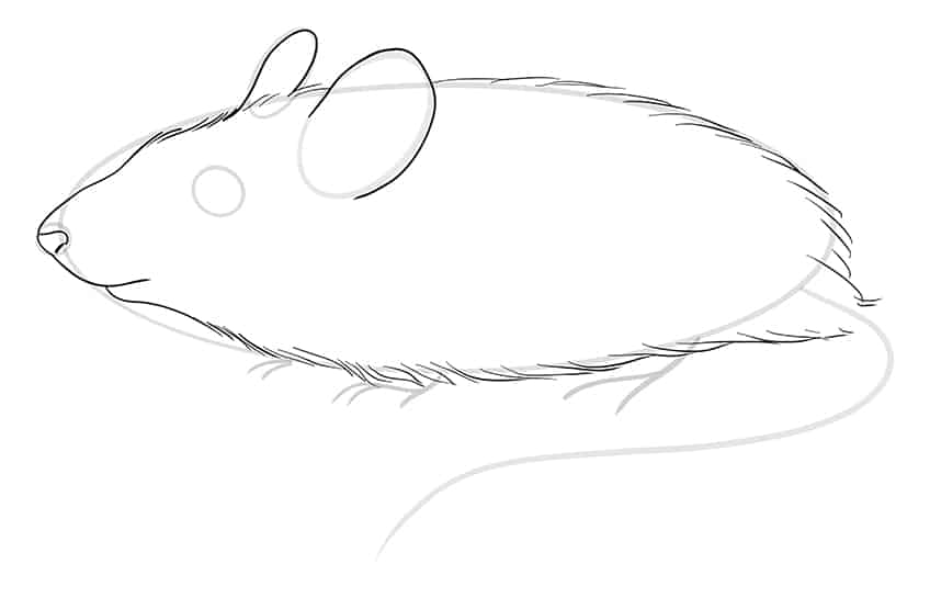 mouse drawing step7