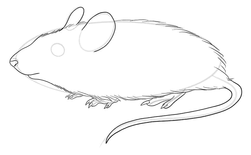 mouse drawing step8