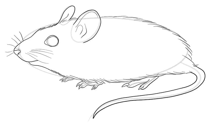 mouse drawing step9