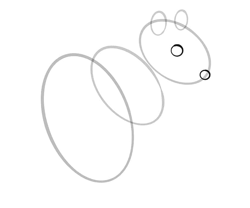 squirrel drawing step5