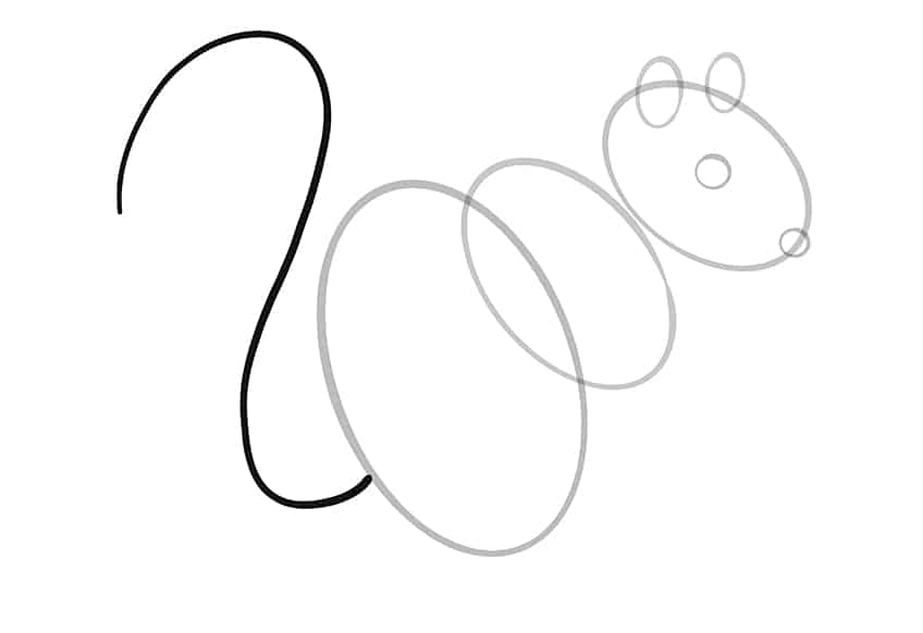 squirrel drawing step6