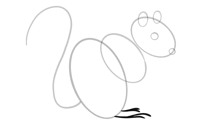squirrel drawing step7