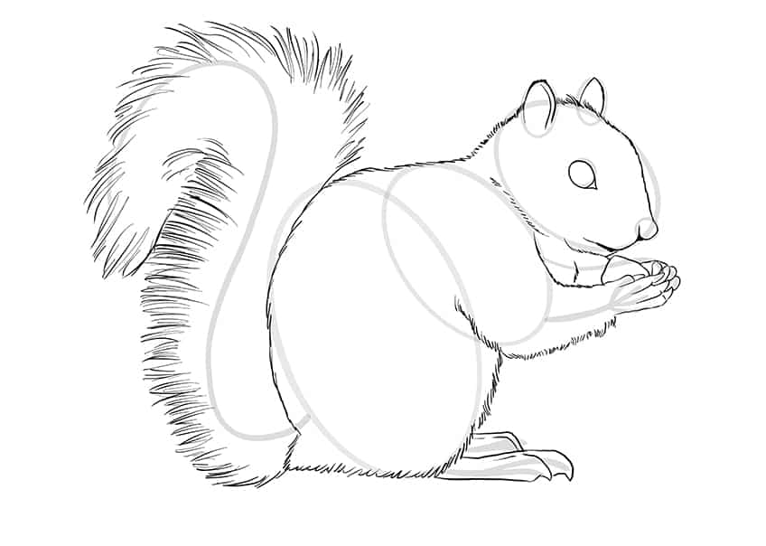 squirrel drawing step9