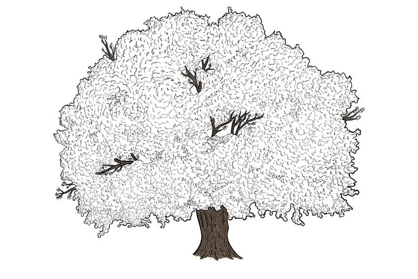 tree drawing 10