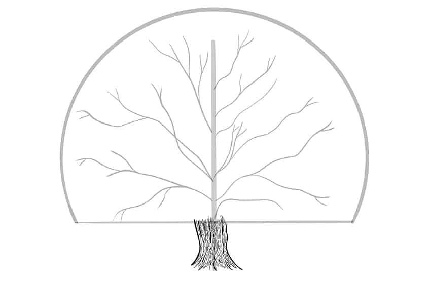 tree drawing 6a