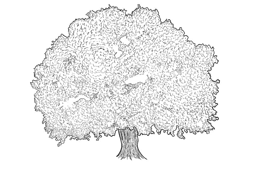 tree drawing 8