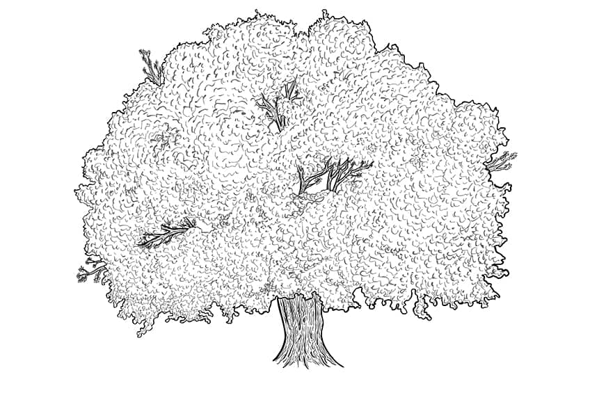tree drawing 9a