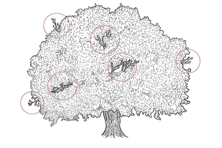 tree drawing 9b