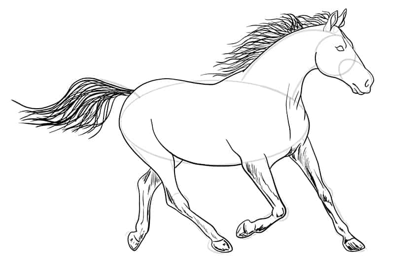 Easy Horse Drawing Step 12b