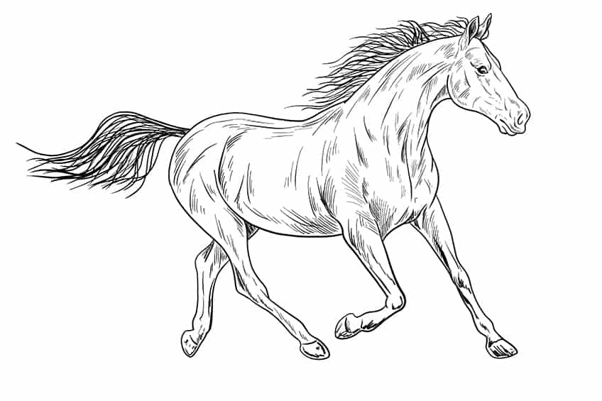 Easy Horse Drawing Step 13