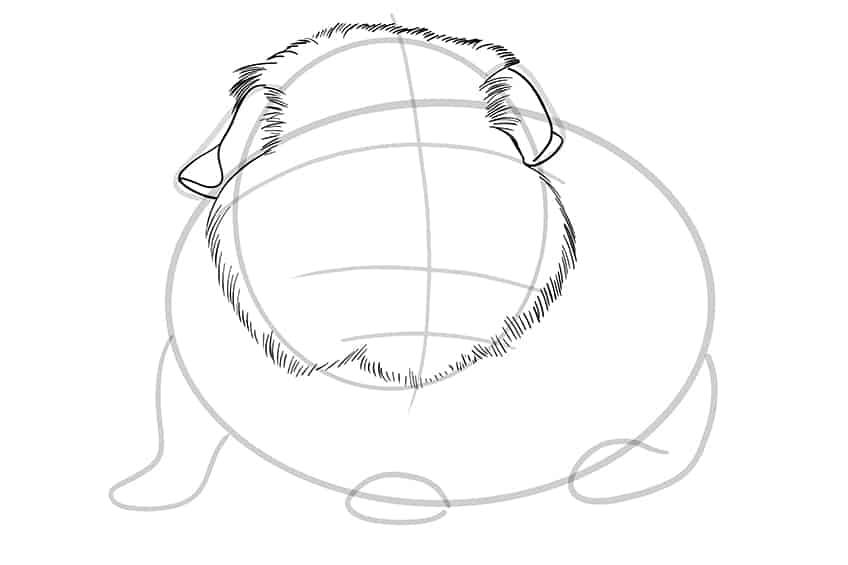 Guinea Pig Sketch Step 06