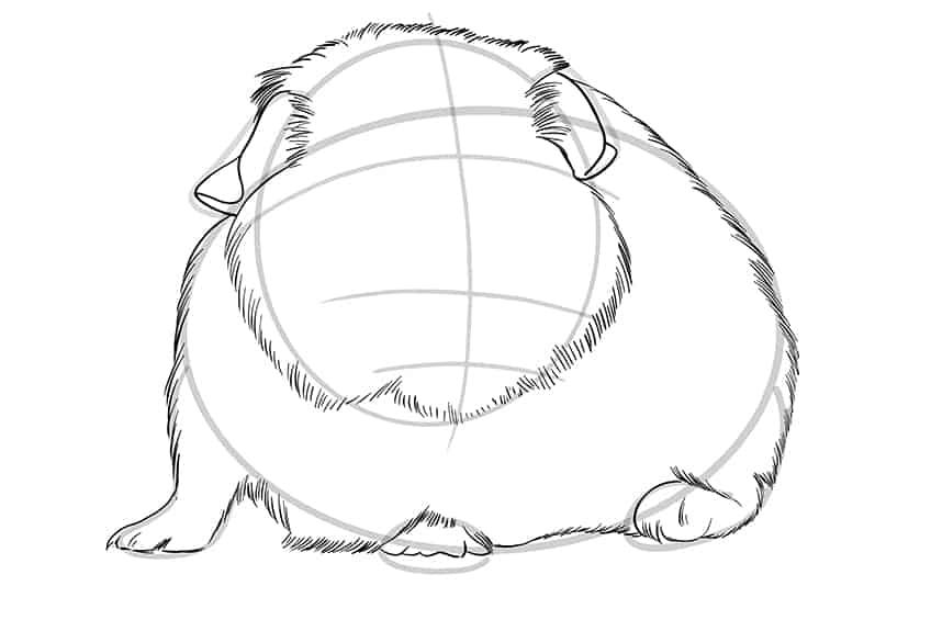 Guinea Pig Sketch Step 07