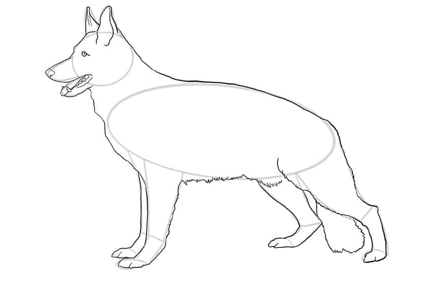 Step 07 of German Shepherd Drawing